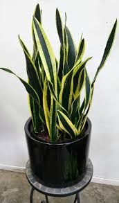 Best Low Light Indoor Plants by Houseplants Payless Hardware Rockery U0026 Nursery
