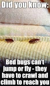 Do Bed Bugs Jump From Person To Person 14 Best Did You Know Images On Pinterest 3 4 Beds Bed Bugs And