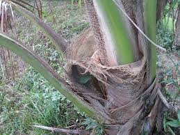 coconut tree cloth flora and fauna weekly report