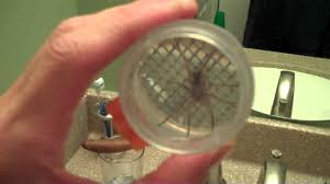 backyard safari turbo bug vacuum wolf spider in the bath tub