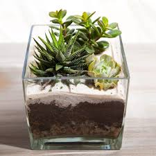 14 fresh mini indoor gardens that will surprise you top inspirations