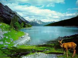 wallpaper nature deer on a lake 4235233 1024x768 all for desktop