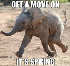 Elephant Meme - get a move on it s spring elephant meme picsmine