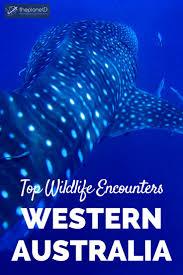 best 25 western australia tourism ideas on pinterest unusual