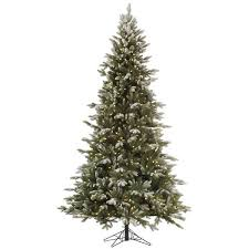 best 25 balsam fir tree ideas on balsam fir