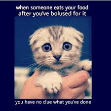 Diabetes Cat Meme - best of 26 diabetes cat meme wallpaper site wallpaper site