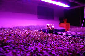 full spectrum led grow light 300w equivalent rectangular panel