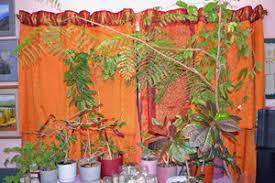 Sari Curtain In India Making Of The Sari Curtains Travel Blog