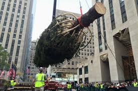 rockefeller center tree goes up midtown new york