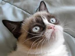 Original Grumpy Cat Meme - who was the original grumpy cat blogbestpet