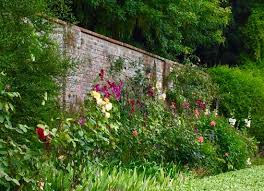 the walled garden with hollyhocks u0026 roses picture of stonor park