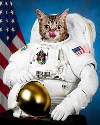 Lil Bub Meme - image 377835 lil bub know your meme