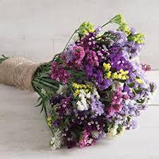 statice flowers outsidepride statice purple 1000 seeds garden outdoor