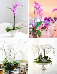 orchid centerpieces potted orchid centerpieces for your big day alexan events