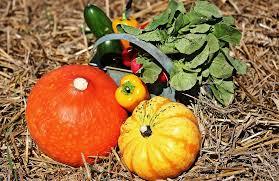 free photo thanksgiving pumpkins cucumbers free image on