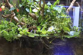 Live Plants In Community Aquariums by Top 5 Freshwater Fish Species For Planted Tanks