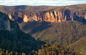 blue mountains native plants greater blue mountains world heritage area nsw national parks