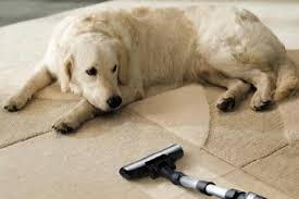 what type of vacuum cleaner works best for pet hair howstuffworks