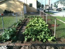 urban vegetable gardening video and photos madlonsbigbear com