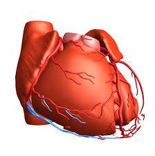 Borders Of The Heart Anatomy Exploratory Data Analysis Iii Dimensions Of The Heart U2014 Explora