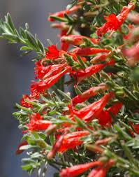 native plants names here are some popular and easy native plants for san diego