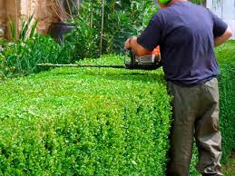 cura giardino cura giardino modena castelnuovo rangone servizio giardinaggio