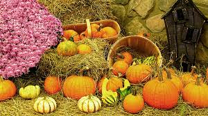 fall cornucopia autumn thanksgiving harvest bumpy gourds and