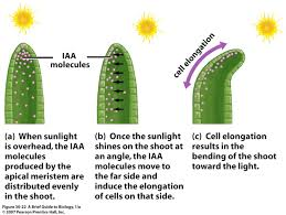 light and plant growth what chemicals and structures control the direction of plant