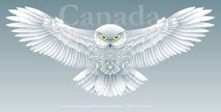 snowy owl clipart flying pencil and in color snowy owl clipart
