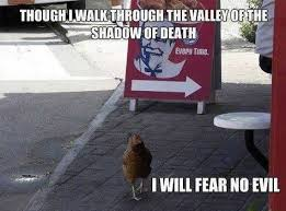 Funny Chicken Memes - funny chicken picture