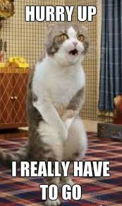 Funny Memes About Cats - funny cute angry cat memes collection for friends family