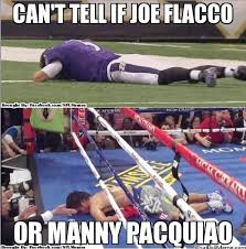 Ravens Steelers Memes - funny pictures of steelers and ravens alleghany trees
