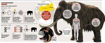 woolly mammoth cloning war scientists divided ethics