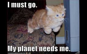 Internet Meme Cat - classic internet meme dump album on imgur