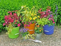 colourful low cost bucket planters u2013 for less than a dollar a