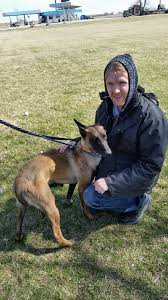 belgian shepherd rescue dogs abmr malinois rescue blog