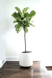 home interior plants house plants low light rooms home interior pro