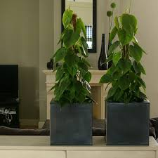 decorum company philodendron products products the brand