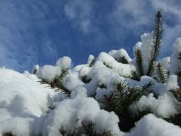 free images tree branch mountain snow winter cloud frost