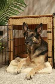 Dog Crate With Bathroom by To Crate Or Not To Crate Karen Pryor Clicker Training