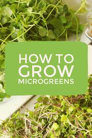 24 best micro greens images on pinterest indoor gardening