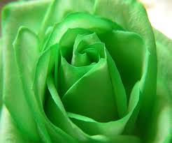 green roses green live wallpaper android apps on play