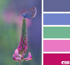 Colors That Match With Purple 1486 Best Color Images On Pinterest Color Schemes Colors And