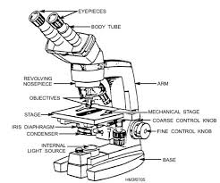 light microscopy clipart labeled function pencil and in color