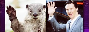 Cumberbatch Otter Meme - tastefully offensive on tumblr graham norton asks benedict