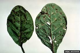 Plant Diseases Identification - common tree diseases