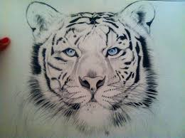 white tiger by dmalakian on deviantart