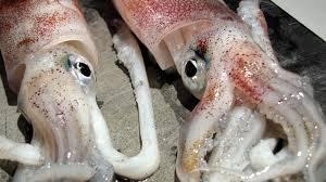comment cuisiner l encornet comment préparer des encornets calamars