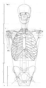 Anatomy Of Human Body Bones 171 Best Character Anatomy Bones Images On Pinterest Human