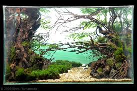 Aquascaping Competition 300 Best Saikei And Penjing Landscapes And Aquascaping Images On